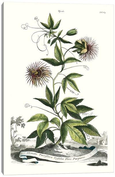 Garden Varieties II Canvas Art Print
