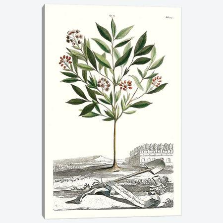 Garden Varieties III Canvas Print #MUN9} by Abraham Munting Art Print