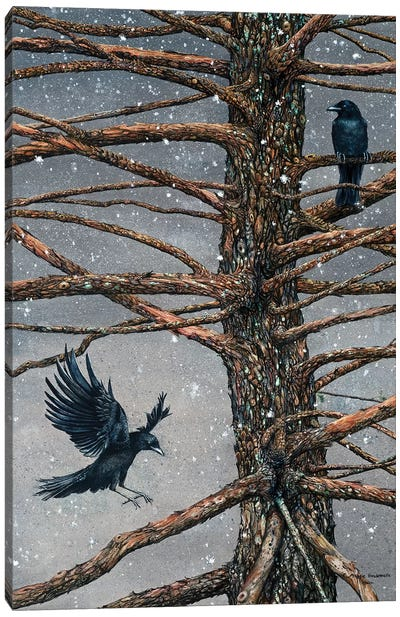 Corvus Corvidae And The Cedar Canvas Art Print