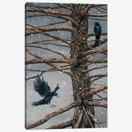 Corvus Corvidae And The Cedar Canvas Print #MVA22} by Maggie Vandewalle Canvas Wall Art