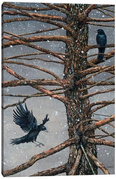 Corvus Corvidae And The Cedar Canvas Art Print