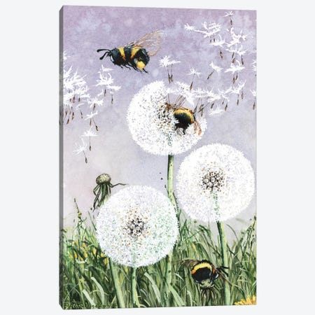 Dandybees Canvas Print #MVA24} by Maggie Vandewalle Art Print