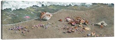 Detritus Canvas Art Print