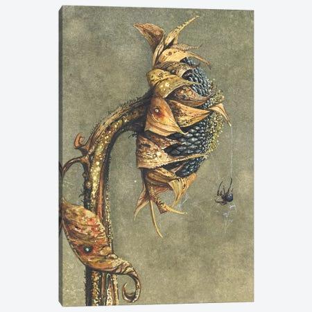 Along Came A Spider Canvas Print #MVA6} by Maggie Vandewalle Canvas Art