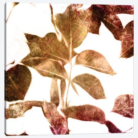 Fall Universal Leaves Canvas Print #MVI124} by Mlli Villa Canvas Art Print