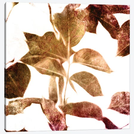 Fall Universal Leaves Canvas Print #MVI124} by Mlli Villa Canvas Art Print