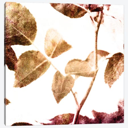 Fall Universal Leaves II Canvas Print #MVI125} by Mlli Villa Canvas Print