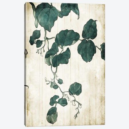 Hanging Leaves II Canvas Print #MVI130} by Mlli Villa Canvas Art Print