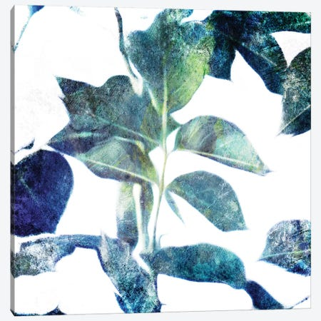 Universal Leaves Canvas Print #MVI153} by Mlli Villa Canvas Art Print