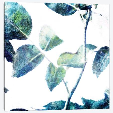 Universal Leaves II Canvas Print #MVI154} by Mlli Villa Canvas Art