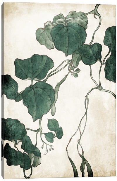 Hanging Leaves III Canvas Art Print