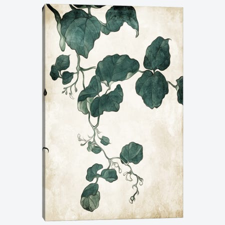 Hanging Leaves IV Canvas Print #MVI176} by Mlli Villa Canvas Artwork