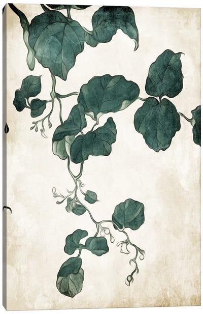 Hanging Leaves IV Canvas Art Print