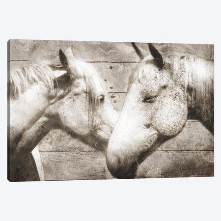 Love Horses Canvas Print #MVI25} by Mlli Villa Canvas Print