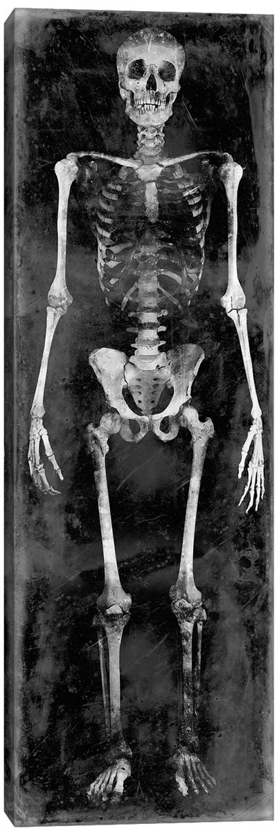 Skeleton II Canvas Art Print