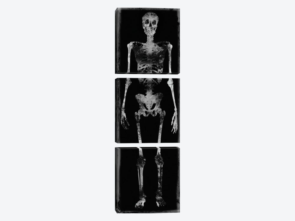 Skeleton III by Martin Wagner 3-piece Canvas Art