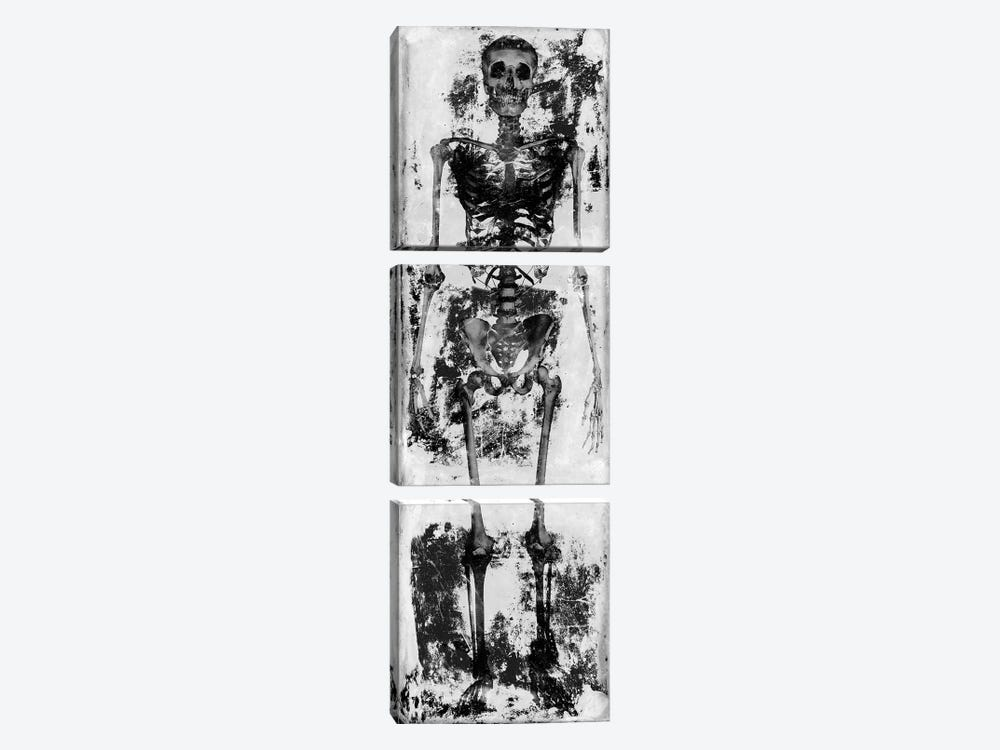 Skeleton IV by Martin Wagner 3-piece Canvas Print