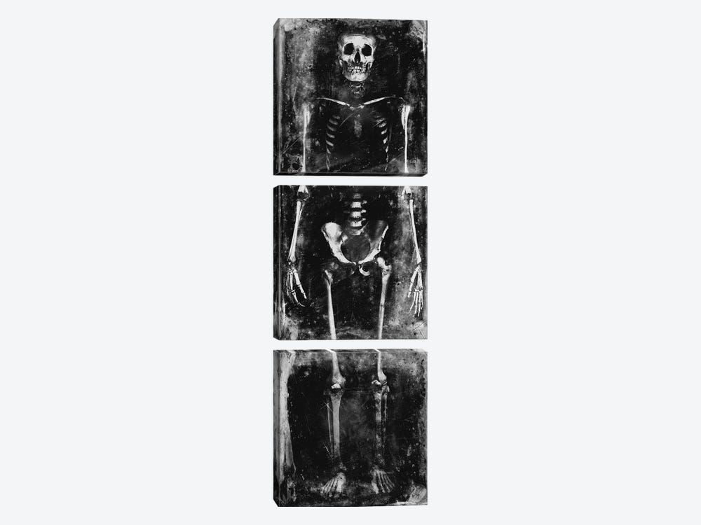 Skeleton I by Martin Wagner 3-piece Canvas Artwork