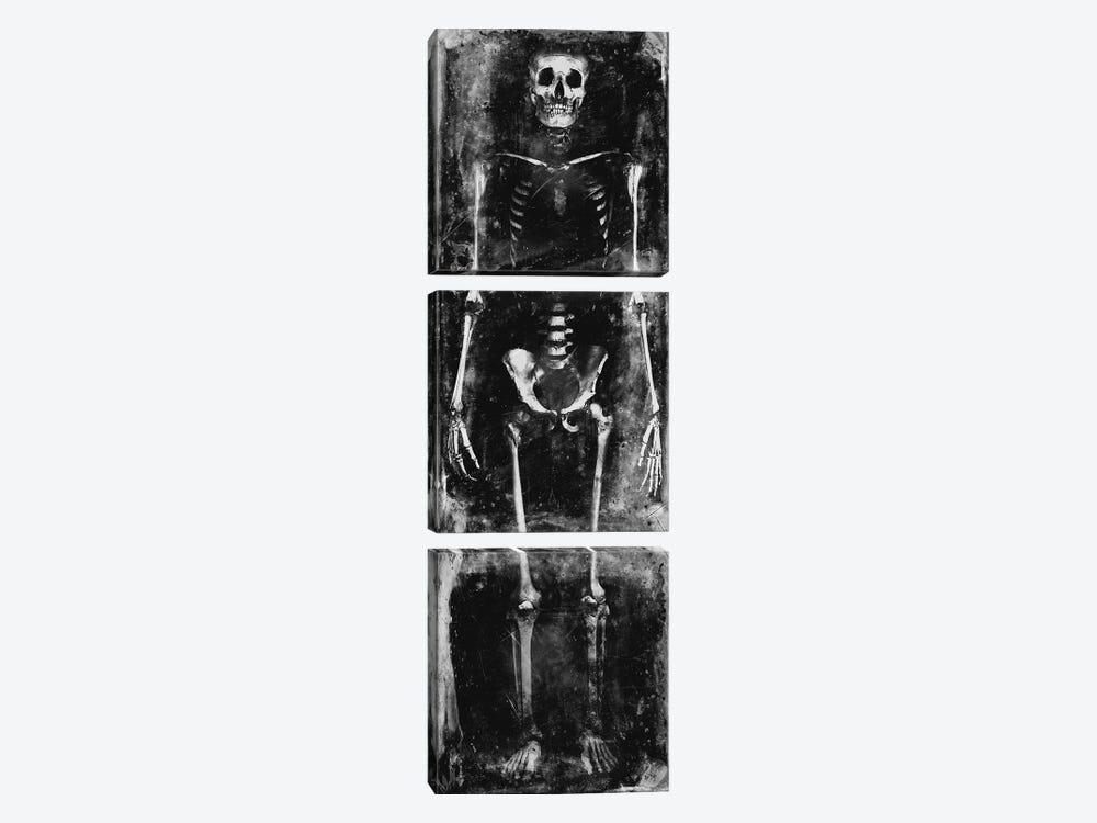 Skeleton I by Martin Wagner 3-piece Canvas Artwork