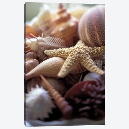 Lone Starfish Canvas Print #MWE1} by Michele Westmorland Canvas Art