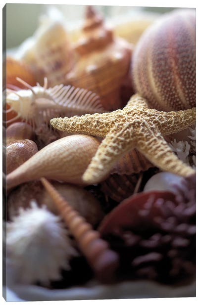 Lone Starfish Canvas Art Print