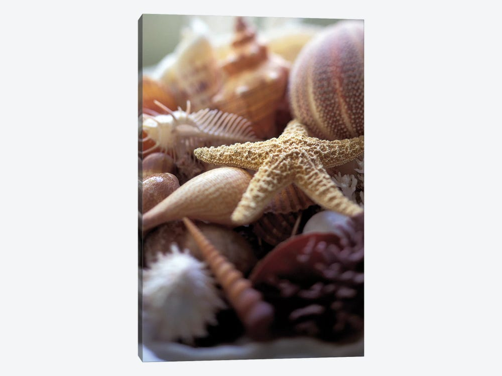 Lone Starfish by Michele Westmorland 1-piece Canvas Art