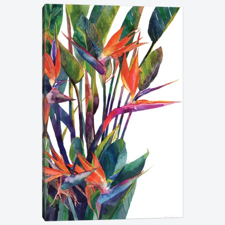Bird Of Paradise Canvas Print #MWR6} by Maja Wronska Canvas Art Print