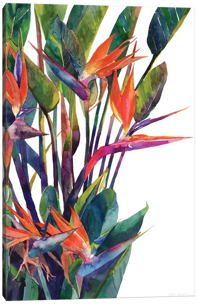 Bird Of Paradise Canvas Art Print