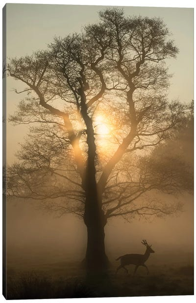 Dawn Tree Canvas Art Print