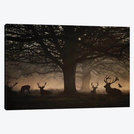 Deep In The Woods Canvas Print #MXE12} by Max Ellis Canvas Artwork