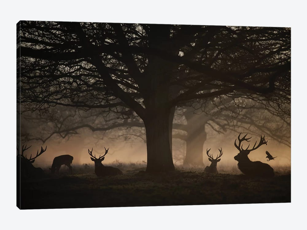 Deep In The Woods by Max Ellis 1-piece Canvas Art Print