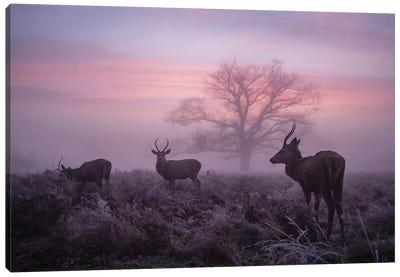 Glorious Dawn Canvas Art Print