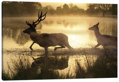 Golden Crossing Canvas Art Print