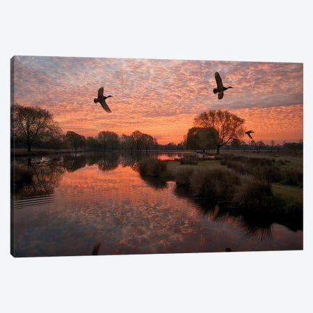 3 Ducks Canvas Print #MXE1} by Max Ellis Canvas Print