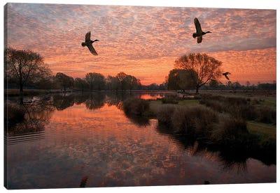 3 Ducks Canvas Art Print