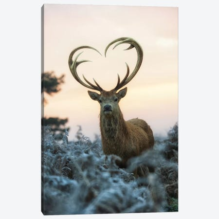 Heart Shaped Antlers I Canvas Print #MXE21} by Max Ellis Canvas Print