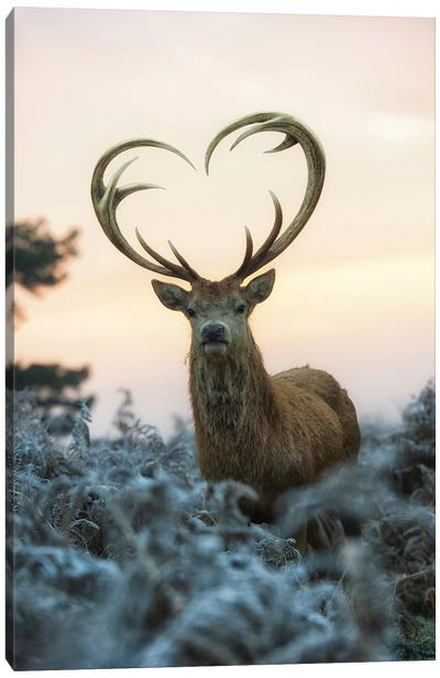 Heart Shaped Antlers I Canvas Art Print