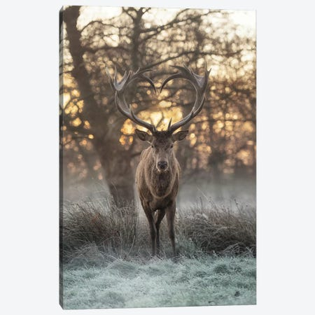 Heart Shaped Antlers II Canvas Print #MXE22} by Max Ellis Art Print