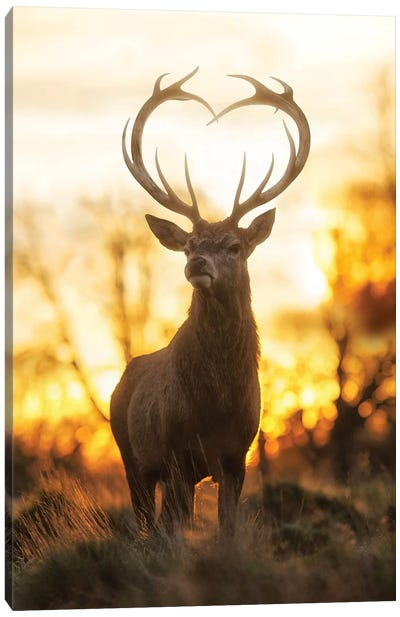 Heart Shaped Antlers IV Canvas Art Print