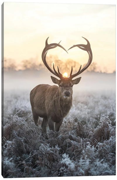 Heart Shaped Antlers V Canvas Art Print