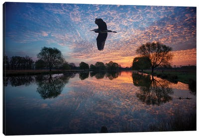 Heron Crossing Canvas Art Print