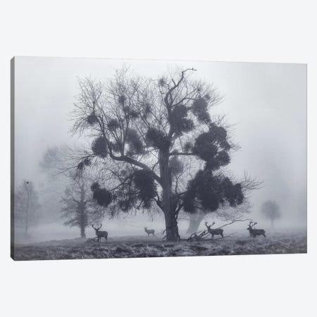 Mistletoemist Canvas Print #MXE32} by Max Ellis Canvas Art