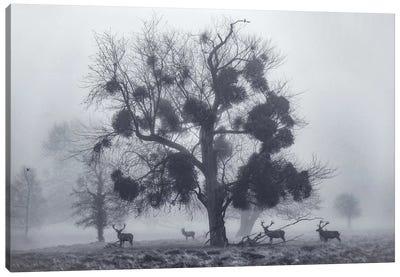 Mistletoemist Canvas Art Print
