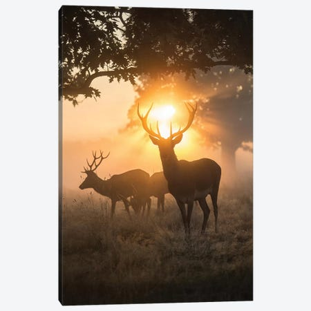 Misty Magic Canvas Print #MXE33} by Max Ellis Canvas Art