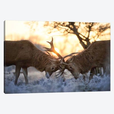 Morning Warm Up Canvas Print #MXE34} by Max Ellis Canvas Art Print