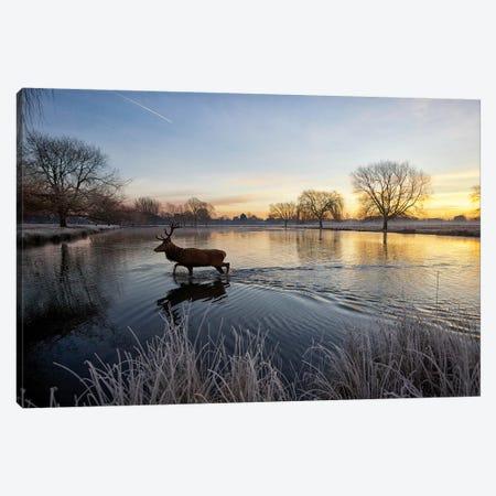 On Golden Pond Canvas Print #MXE36} by Max Ellis Art Print