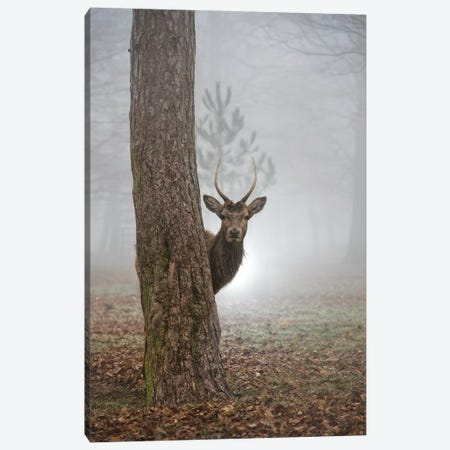 Peekaboo Canvas Print #MXE37} by Max Ellis Art Print