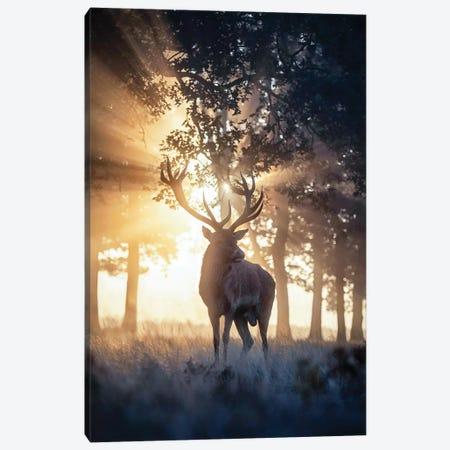 Rayndeer I Canvas Print #MXE40} by Max Ellis Canvas Art Print
