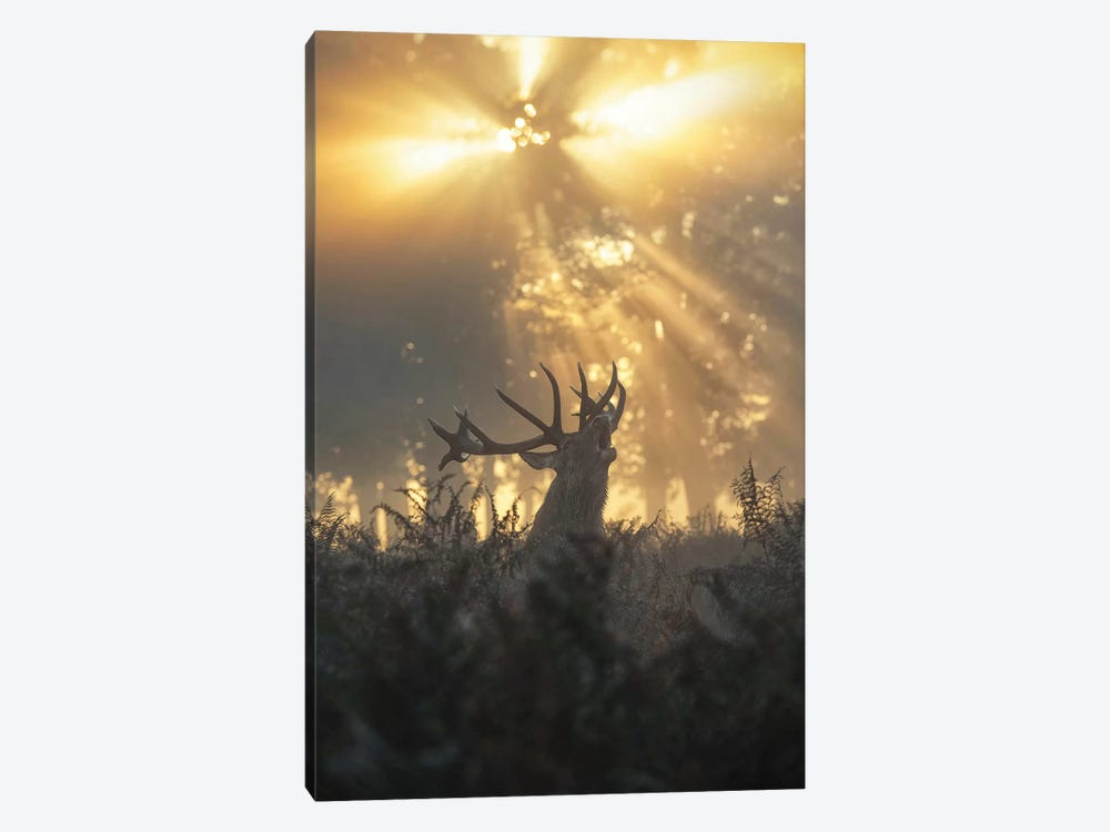 Rayndeer II by Max Ellis 1-piece Canvas Art Print