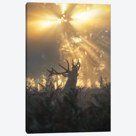 Rayndeer II Canvas Print #MXE41} by Max Ellis Art Print